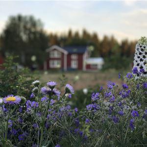 Presteles Trädgårdscafé och logi