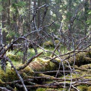 Guidad utflykt i Jämtgavelns naturreservat