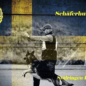 Schäfer SM - SSM IGP 2019