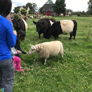 Hofsafari für Kinder in Kasteberg