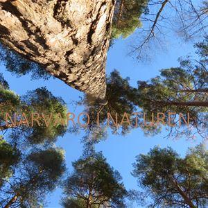 Närvaro i naturen-vandring och närvaro i Falun