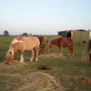 Møllegården Heste farm