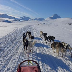 Dogsledding and Aurora Lodge