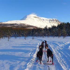 Dogsledding and Aurora Lodge