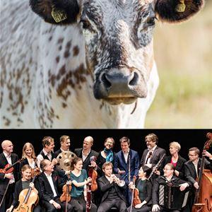 © Estrad norr, Gastronomic concert with the Salon Orchestra