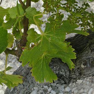 Wine Tour 4h - Provence Cab