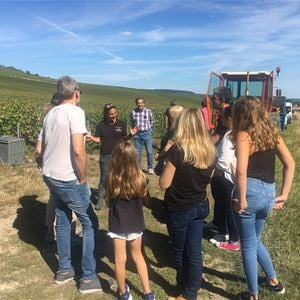 Grape Picker for a day - Champagne Piot Sevillano