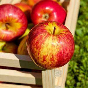 Honungens & Äpplets Dag - Skördemarknad på Korrö
