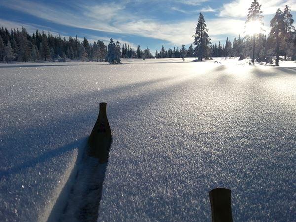 Soligt vinterlandskap med orörd snö och en skidspets i snön.