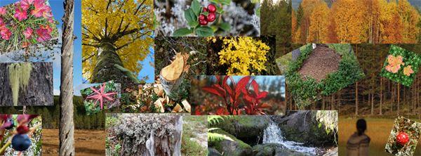 Collage med många bilder på blommor, höstträd och vattenfall.