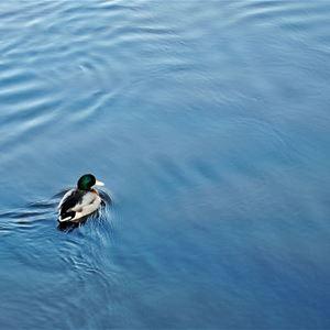 Vid Lagans vatten