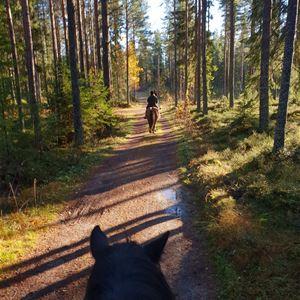 Ryttare som rider på en fin väg och solens strålar genom träden.