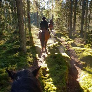Hästglädje i höstglöd - Silverhill Stable