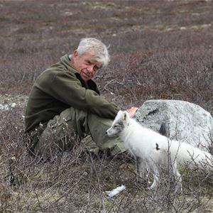 Min vän fjällräven - naturfilm med Ingemar Lind