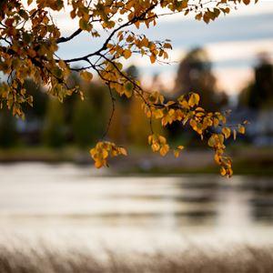 www.ricke.se,  © Malå kommun, Malå Pingstkyrka