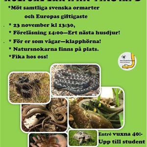 Reptiler på Kulturverkstan