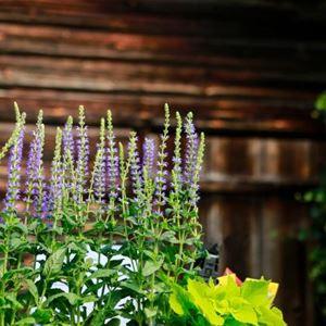 Trädgård & Uteliv - med hantverk och deli