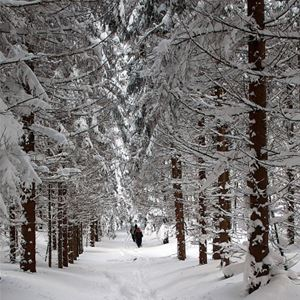 Vinter på Gården!
