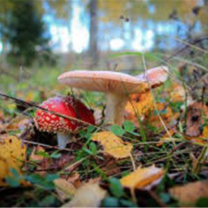 Natursnok - Träd & svamp