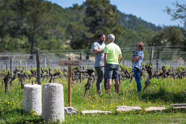 "Winetour & farm to table meal in ""Pic St Loup"""