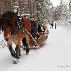 Häst drar släde i vinterlandskap.