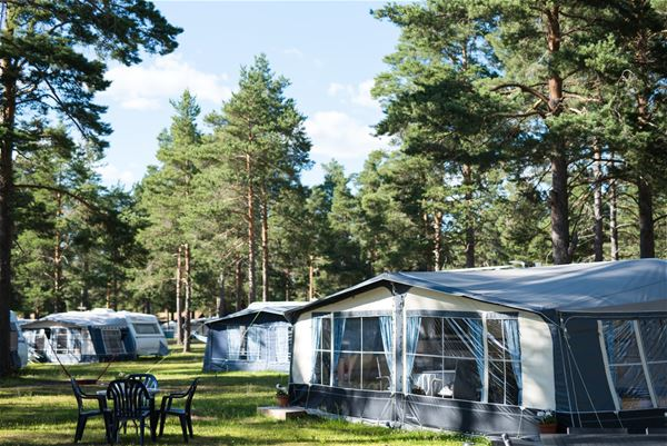 Caravans and tents among the trees at the campsite.