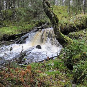 Skogens glömda historiska skatter