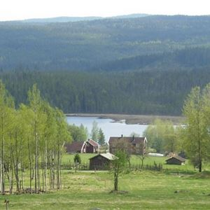 Dan Anderssonveckan – Minnesår