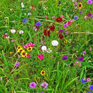 För alla - Blomstervandring