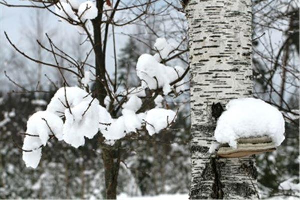 """Fotoutställning: """"Vinter i Sverige"""""""