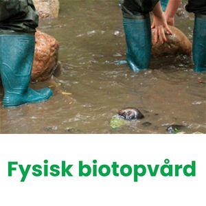 Fysisk biotopvård