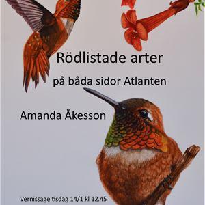 Konstutställning - Rödlistade arter på båda sidor Atlanten