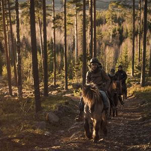 Stilleben Sweden,  © Stilleben Sweden, Stilleben ridning hästar skogen