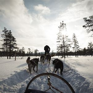 Stilleben Sweden,  © Stilleben Sweden, Stilleben Hundspann vinter