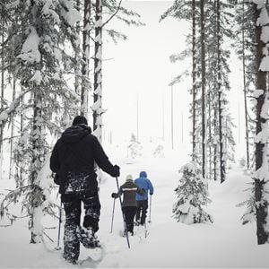 Stilleben Sweden,  © Stilleben Sweden, Stilleben skogstur vinter