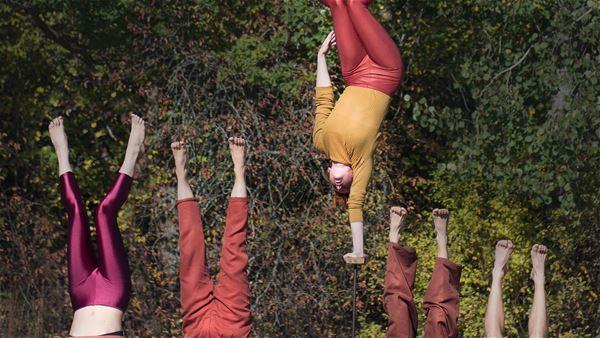 Fauna - cirkusteknink i världsklass