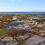 Föreläsning - Historiens spår i kustlandskapet
