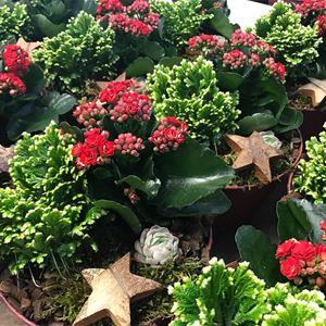 Julmarknad i växthuset på Forsa Handelsträdgård