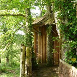 © TRENCALLI, HPCH131 - La cabane aux oiseaux dans les arbres :