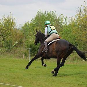 Fälttävlan för ponny och ridhäst