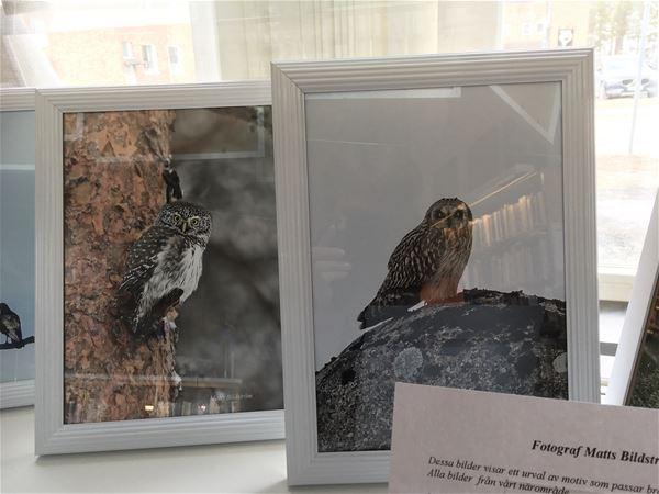 Utställning: Närnatur Malå
