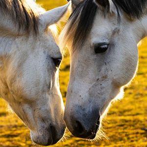 Lek och lär med ponny