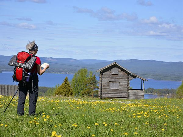 En vandrare står på en äng med gula blommor och tittar på en karta. Utsikt över Orsasjön och ett grått härbre.