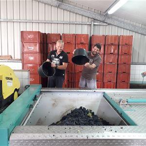Grape Picker for a day - Champagne Xavier Leconte