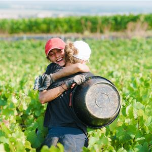 Grape Picker for a day - Champagne Guy de Chassey