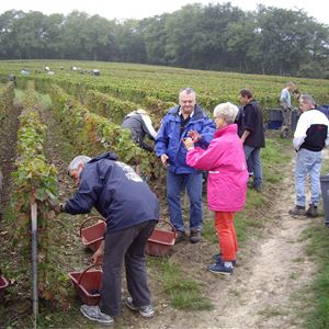 Grape Picker for a day - Champagne Boulard Bauquaire