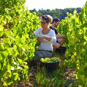 Grape Picker for a day - Domaine La Borderie