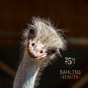 Pubkvällar på Sahlins Struts