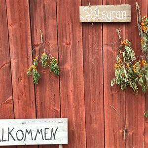Mat runt Siljan - Solsyran