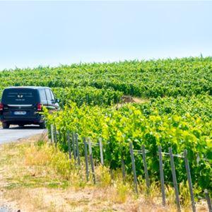 Half-day minivan and driver guide at disposal